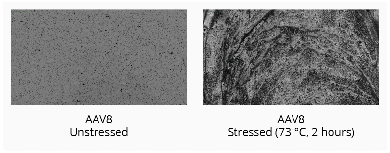 Monitor and categorize the type of aggregate formed in thermally stressed AAV5 samples